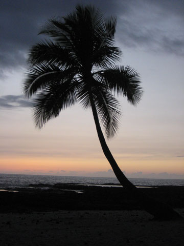 dark palm tree