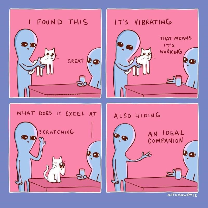 strange planet cat