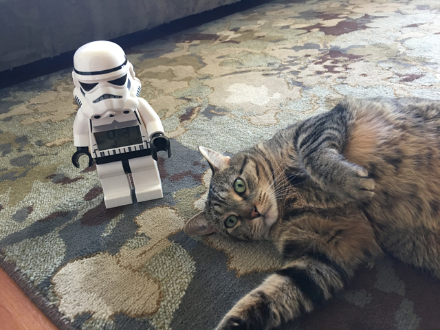 may the 4th tabby