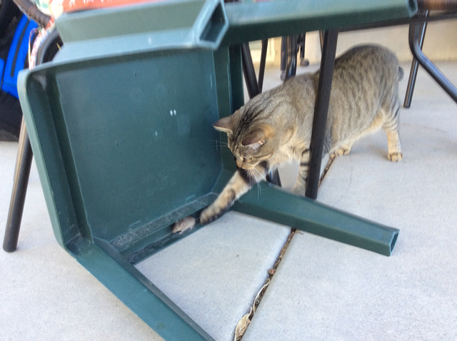 tabby mouse patio
